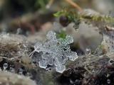 snowflakes-macro-photography-andrew-osokin-21
