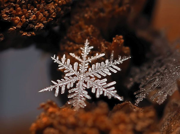 snowflakes-macro-photography-andrew-osokin-8